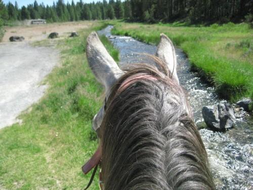 Horseback Trail Riding. Horseback Riding along Paulina