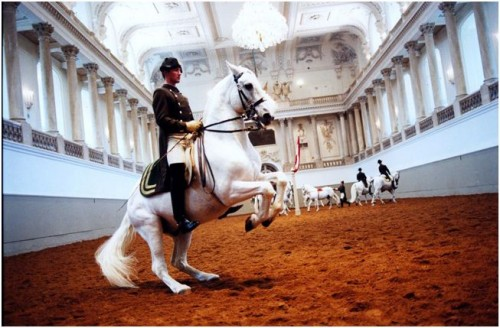 Horseback Riding Vacation to Vienna, Austria's Spanish Riding School