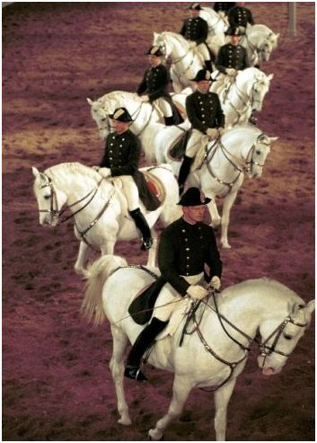 Riding Lipizzaner's at the Spanish Riding School, Vienna, Austria