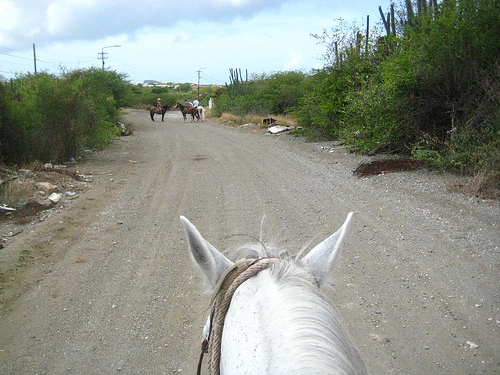 Rusted bed frames and bags of garbage flanked the road during our Curacao horseback riding vacation