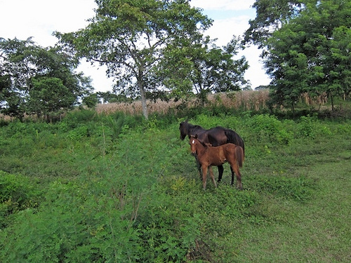 Have you been on a horseback riding vacation in Belize? These horses are waiting to greet you.