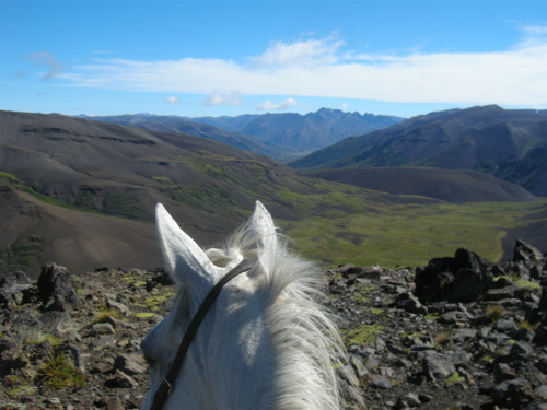 This Criollo horse takes equestrians on a horeback riding vacation in the Argentina Andes