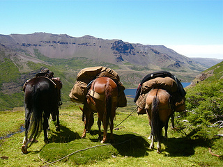 Horses graze in the mountains of Patagonia on an Argentina horseback riding vacation