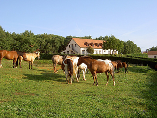 Horseback riding vacation at Domaine des Garennes in France