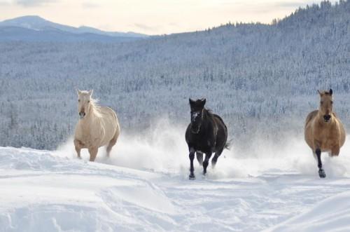 Jandana Ranch horses