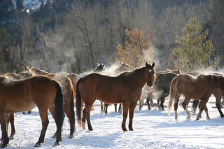 """Ranch at Rock Creek horses"""
