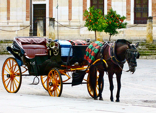 """horse and carriage"""