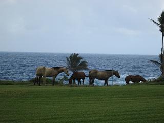 """""""Hana horses"""""""