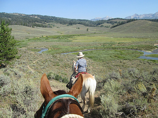 horses, Shoal Creek, Wyoming