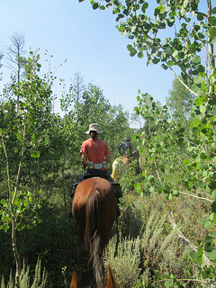 horseback riding Bridger-Teton National Forest, Wyoming