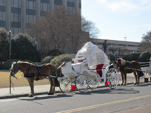 elvis presley, horses, memphis, TN