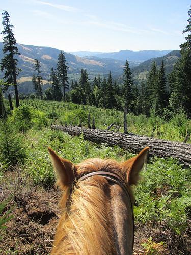 """horseback riding """"Columbia Gorge"""" washington"""
