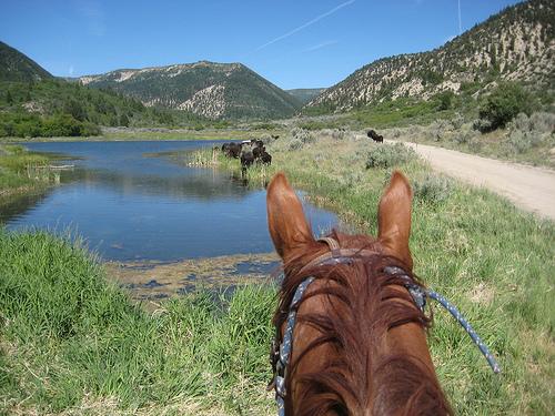 "horseback riding ""western Colorado"""