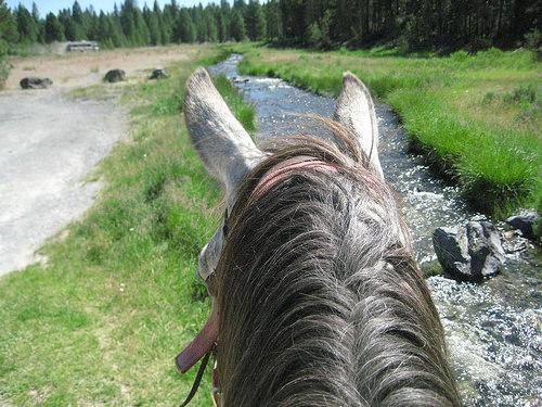 """""""Paulina Creek"""" horseback riding"""