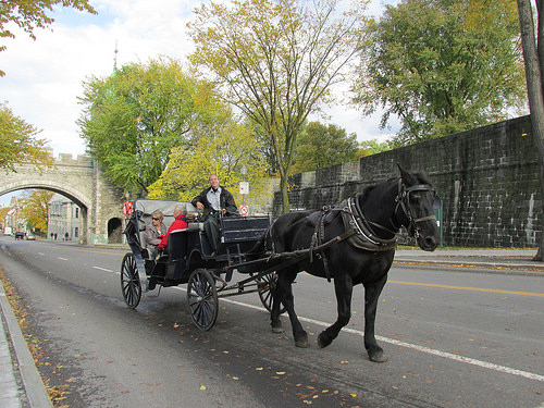 "horse, carriage, ""Quebec City"", Canada"