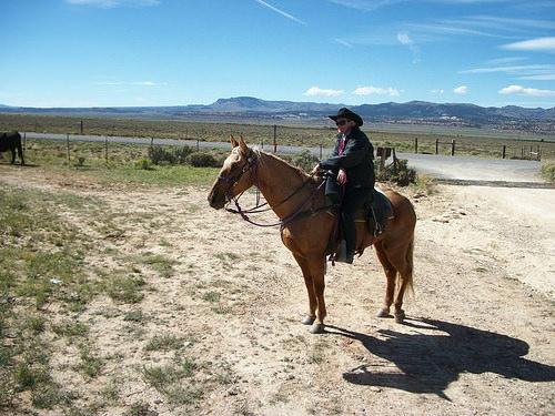 horse, Sherry Bedard, Utah