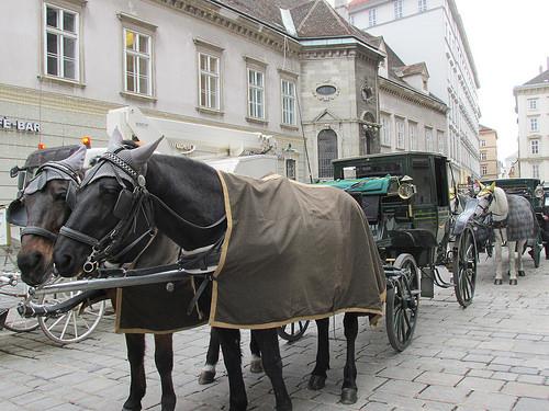 horse carriage, Vienna, Austria