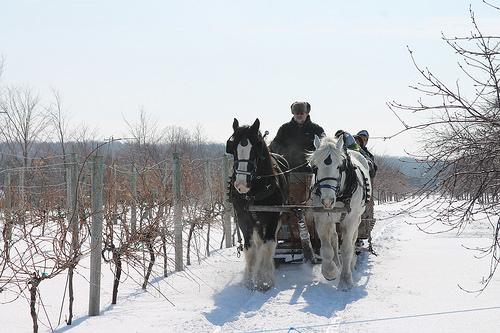 Door County, horses