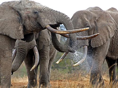 elephant, aardvark safaris