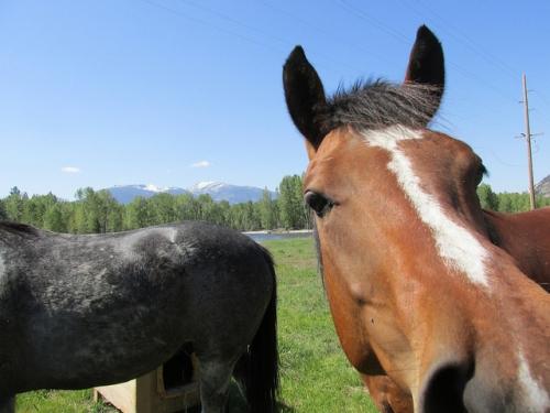 Triple Creek Ranch, Women's Rocky Mountain Rendezvous