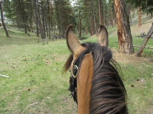 Triple Creek Ranch, cattle drive