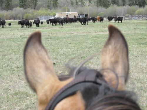 Triple Creek Ranch, between the ears