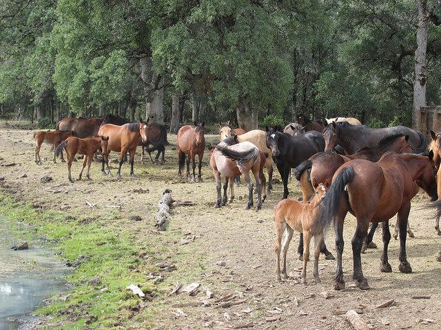 wild horses, wild horse sanctuary, california