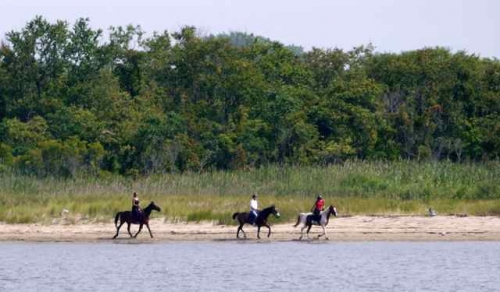 horses, gateway national recreation area, horses