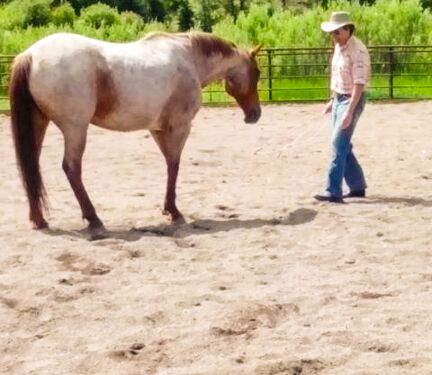mark rush, 4ur ranch, natural horsemanship, horse