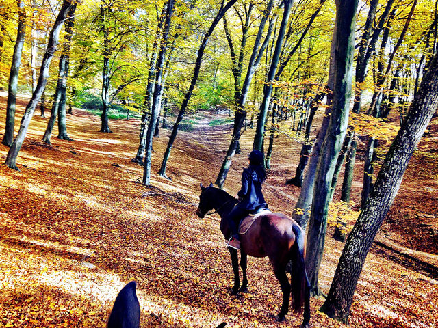 riding in transylvania, horseback riding in romania