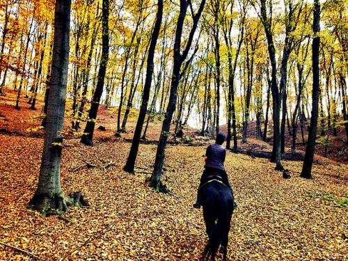 horse riding, transylvanian forest, horse riding Transylvania