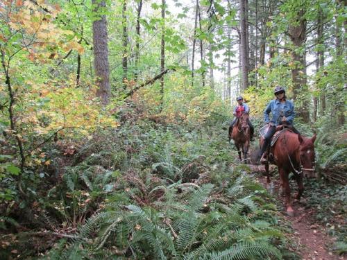 horseback riding, oregon, portland