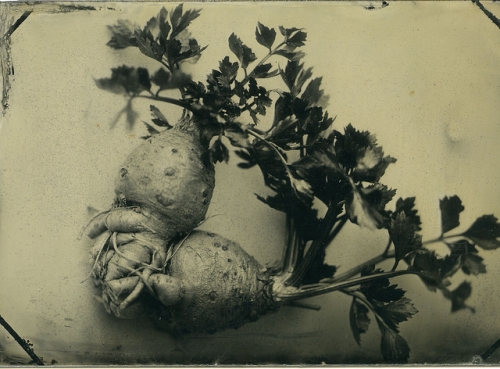 root vegetable, tintype, lindsey ross photography