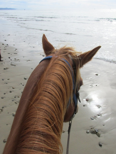 between the ears, pacific ocean, horse