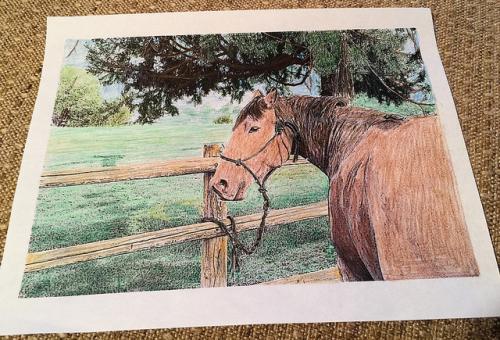 horse, mackay bar ranch, idaho