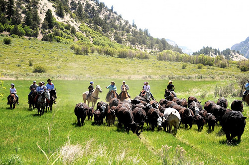 cattle drive, high lonesome ranch, de beque, colorado