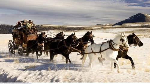 hateful eight, stagecoach, horses