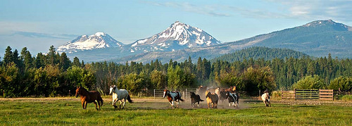 black butte ranch, black butte stables, horses, central oregon, oregon