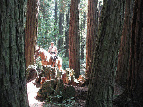 east bay hills trail ride, redwoods, horseback riding,