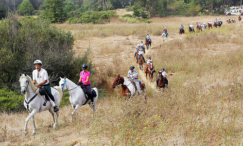 east bay hills trails, east bay hills trail ride, east bay horseback ride,
