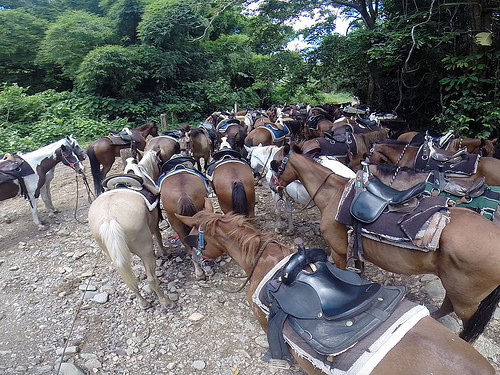 Carabali Rainforest Park, horseback riding, horses, trail ride, san juan, puerto rico