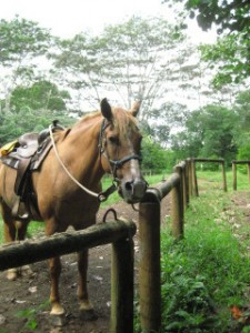Princeville Ranch Horseback Riding Vacation