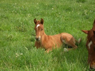 New foal waiting to take you on a horseback riding vacation at Sylvan Dale Guest Ranch