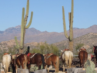 A Horseback Riding Vacation at Tanque Verde Ranch