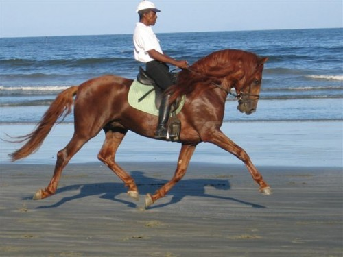 A horseback riding vacation at Sucandi in Brazil
