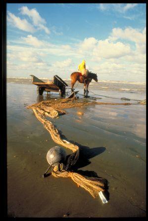 Shrimp Fishermen - Equestrians of the North Sea