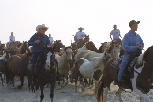 Saltwater Cowboys on a horseback riding vacation on Chincoteague Island, Virginia