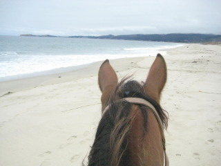 Horseback Riding Vacation in Half Moon Bay, California on Poplar Beach