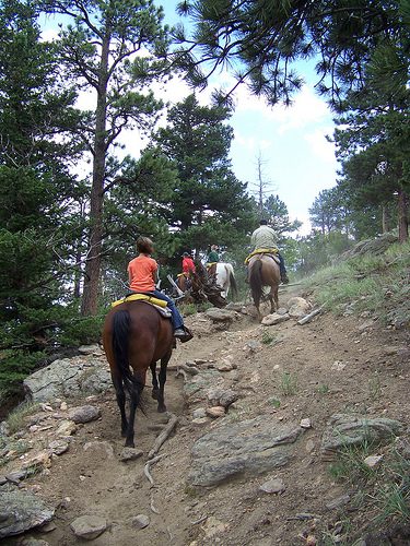 Up the mountain on our horseback riding vacation in Estes, Colorado.