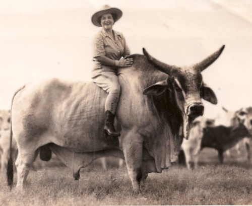 Would you rather ride a bull on a Hawaiian horseback riding vacation?